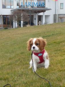hund_toni_im_gruenen_hotel_spa_larimar